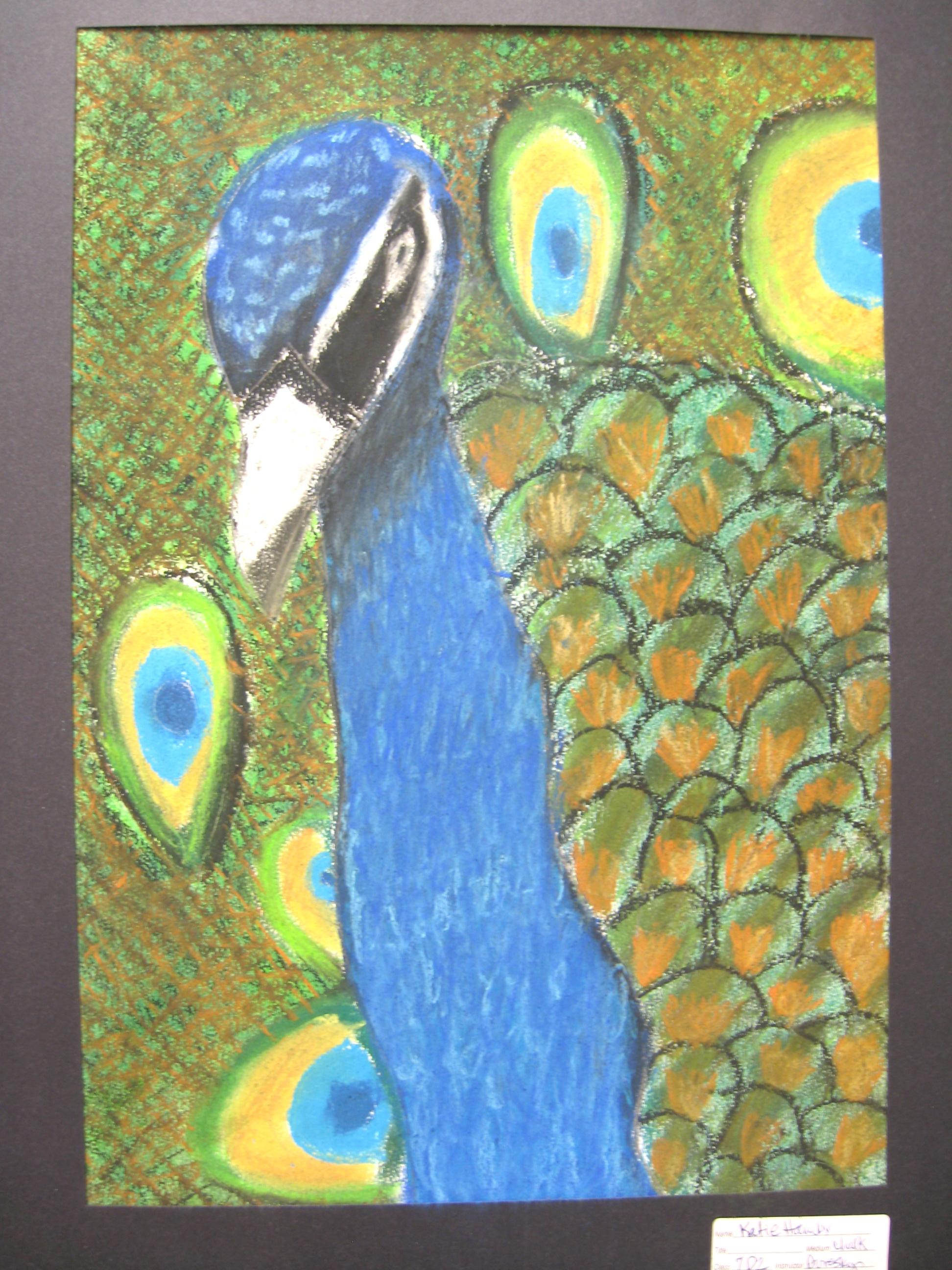 the smartteacher resource  tropical birds in chalk pastel